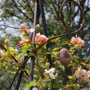 Un rosier grimpant en fleur en haut d'une structure en fer forgé dans la roseraie de Gérenton en fleur au pied du Mont Ventoux