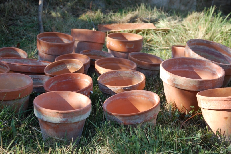 En octobre la pépinière est en ébullition c'est le moment du bouturage des rosiers tous les pots sont prêts, ils attendent les boutures