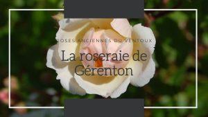 Le rosier trier rose ancienne de la roseraie de Gérenton