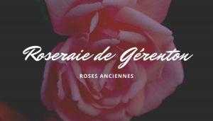 la carte de la roseraie de Gérenton une roseraie spécialisée en rosiers anciens au pied du Mont Ventoux