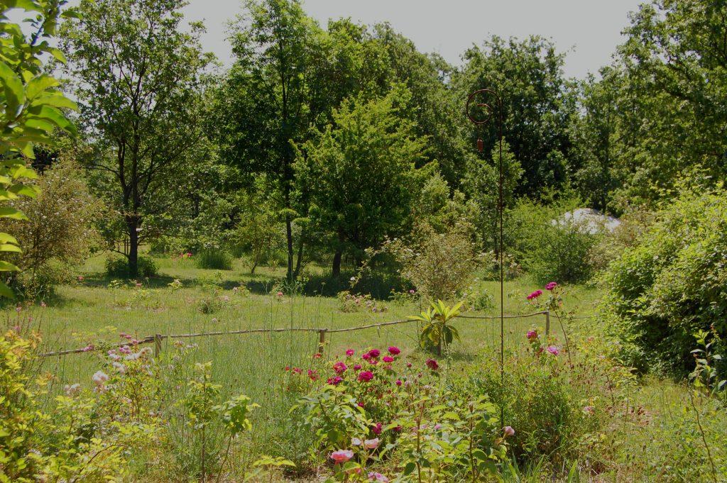 le massif du pommier de Papy Jean dans la roseraie de Gérenton. Au premier plan les rosiers william lobb, charles de mills rené d'anjou et petite lisette
