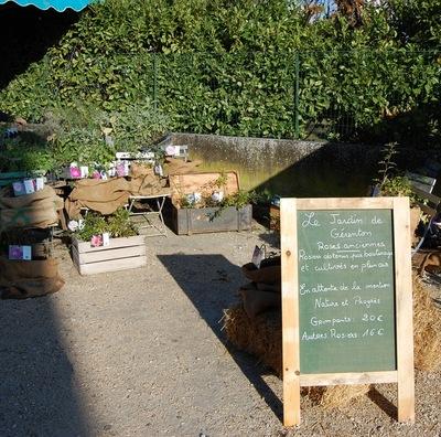 le stand de la roseraie de Gérenton à la fête de la biodiversité au Thor
