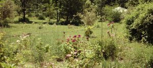 un massif de la roseraie de gérenton en fleur