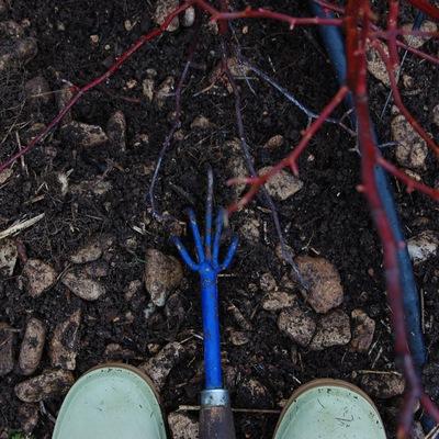 La griffe autour du rosier neige d'avril un rosier grimpant multioflore à la roseraie de gérenton à Bédoin au pied du mont Ventoux