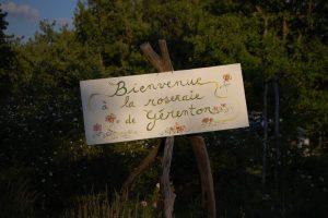 Bienvenue à la roseraie de Gérenton