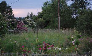 Le jardin Mongol à la roseraie de Gérenton Bédoin Mont Ventoux