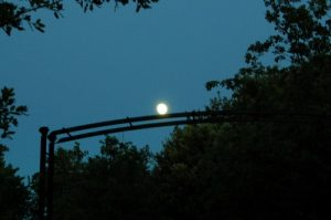 La lune se pose sur les arches de la roseraie de Gérenton à Bédoin en provence