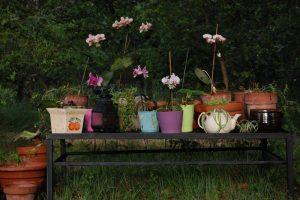 le jardin Kalmouks et ses orchidées en pot collection de la roseraie de gérenton