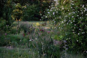 Vue du jardin mongol et du rosier rosa canina tomentella à la roseraie de Gérenton à Bédoin